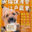 わんにゃん報告Blog-12/3~12/9-