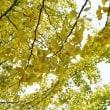 黄葉、、。