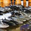 志摩波切・朝の魚市場