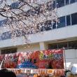 いろんなところの桜