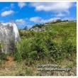 ピナクル(石灰岩の露石)