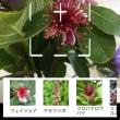 ■「花調べアプリ」活用!