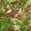 緑萌え、シャクナゲもモミジも花盛りの神戸森林植物園へ