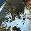 銀座☆クリスマスツリー2017