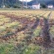 今年も知らないうちに我が家の田んぼの稲刈りは終わっていました。