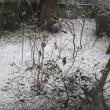 1月22日、銀世界~積雪は27cm