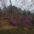 新緑の比叡ハイク。山桜も見ごろでした。