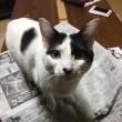 くーさん、新聞の上にのる