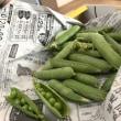 母の日と蕗、とエンドウ豆