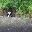 地域猫の仲間入り