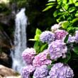 紫陽花の季節9・・・【いな】