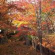 紅葉の函館公園