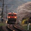 身延線165系 急行「富士川」最後の花見 1995-04-08