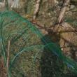 ラッキョウにネット張る