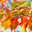 花彩々  秋晴れ