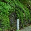 比良山系明王谷 三の滝へ
