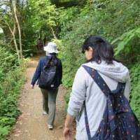 初めての高尾山(下りは4号路)