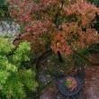 2017猫額庭の紅葉