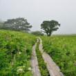 霧ヶ峰「八島ヶ原湿原」を歩く