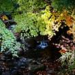 『谷戸川渓谷』 渓流のはじまり