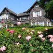 旧古河庭園(バラ)