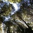 フォト&幻想 360度の樹に囲まれて空が見える