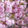 ようやく、春らしく、