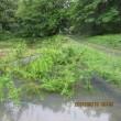 5月19日(土)・大雨で