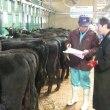 大崎市の和牛繁殖農家組織「若牛会」が産子検査に取り組んでいます