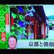 8/21 夏井先生 京都と朝顔