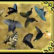 「胡蝶の夢」も、「邯鄲の夢」も視れなくなる時・・・