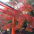 京都の紅葉の現在(いま) ~ 12月5日の下鴨神社の紅葉