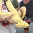 シティパークでペットショー (蛇で〜す)