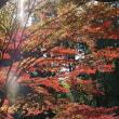 ヤバイ 11月19日(日)晴れ時々曇り