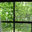 緑のカーテン完成