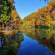 秋の風景を映し出す、イワナの森の池