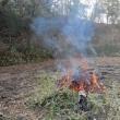 里山で焚火&焼き芋