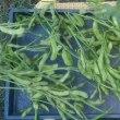明日から秋冬野菜の畝作り始めます。