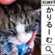 2012/02/24(15:57)撮影写真 猫S