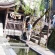 祝米寿 桜街道歩き隊