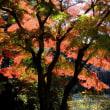 ★日立中央研究所秋の庭園開放デー+殿ヶ谷戸庭園