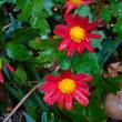 11月18日の花