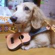 バーディーはシンガーソングライター!