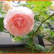 君は薔薇より美しい♪