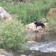 飼い犬を橋の上から投げ棄てた女
