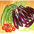 孫たち の   野菜収穫