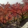 紅葉が美しい!京都へ行って来ました。