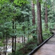 木曽の赤沢自然林に又行こう!