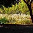 堺市・大泉緑地の風景・・・2