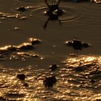 干潟の世界